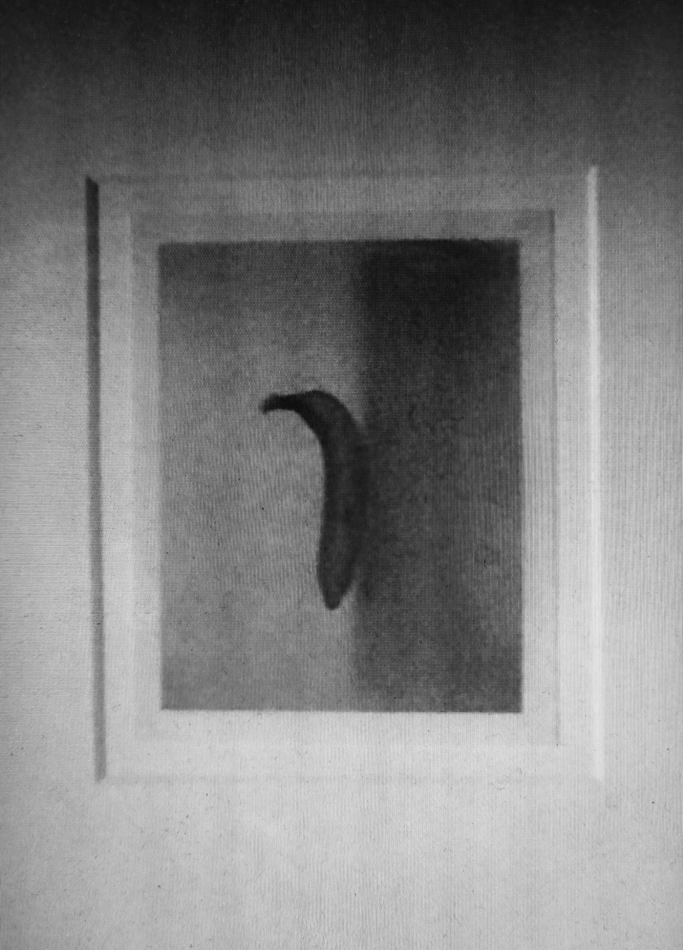 Banana Platónica