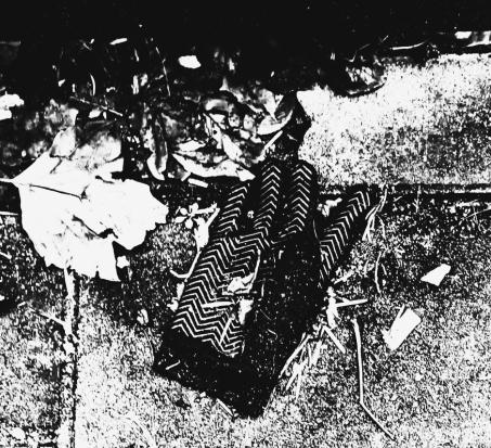 GLOVES 4 (LES FEUILLES MORTES) (FOTO)